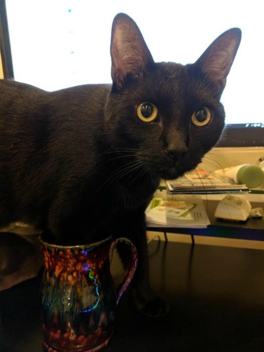 Запустил свои лапки в кофе. | Фото: RTV21.