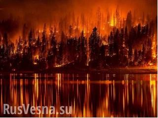 Настоящие причины пожаров: почему российские леса остались без защиты россия
