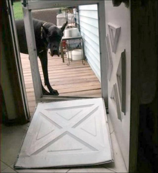 «Я выломал дверь!» | Фото: Загоны.ру.