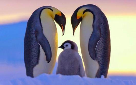 Животные, у которых можно поучиться верности и любви...