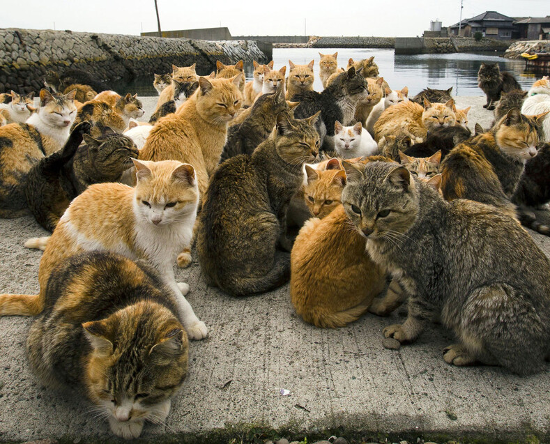 Фото с островов кошек в Японии: удивительная земля, где котов в разы больше, чем людей остров котов,путешествия,япония