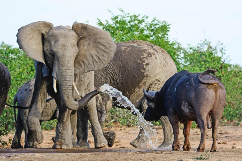 Слоны приколы картинки