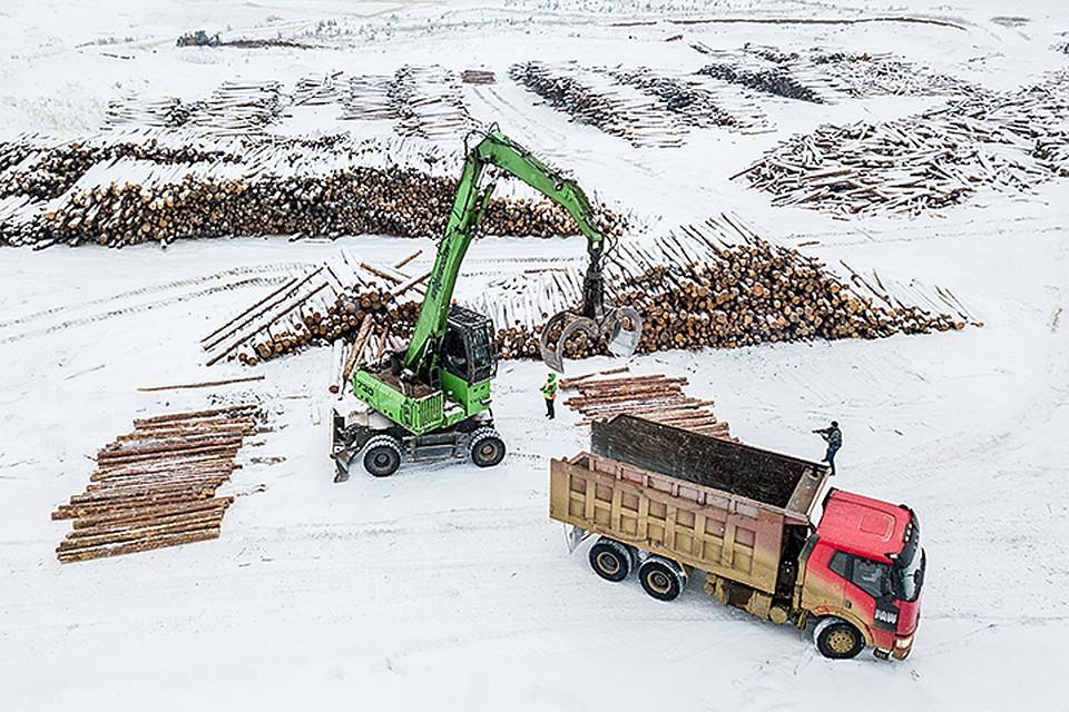 В 2018 году древесины из края вывезли на 48 миллиардов рублей. А в бюджет региона поступило всего 1,6 миллиарда