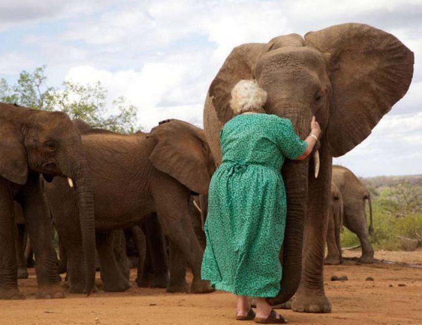 Открытки, слоны приколы картинки