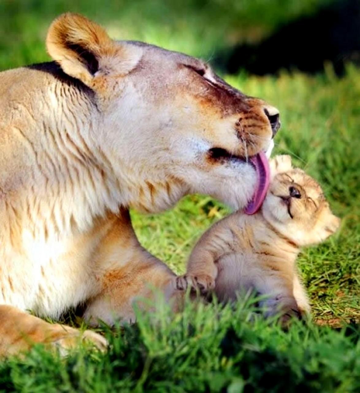 Животное варит зелье картинка как камень