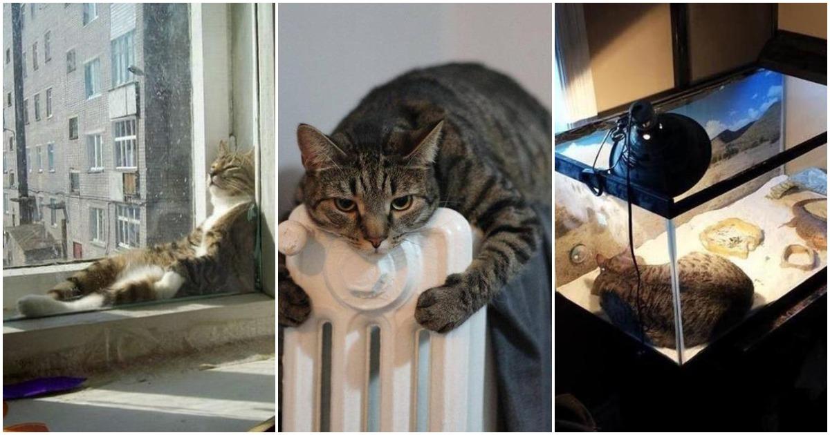 25 самых «теплых» фотографий домашних питомцев