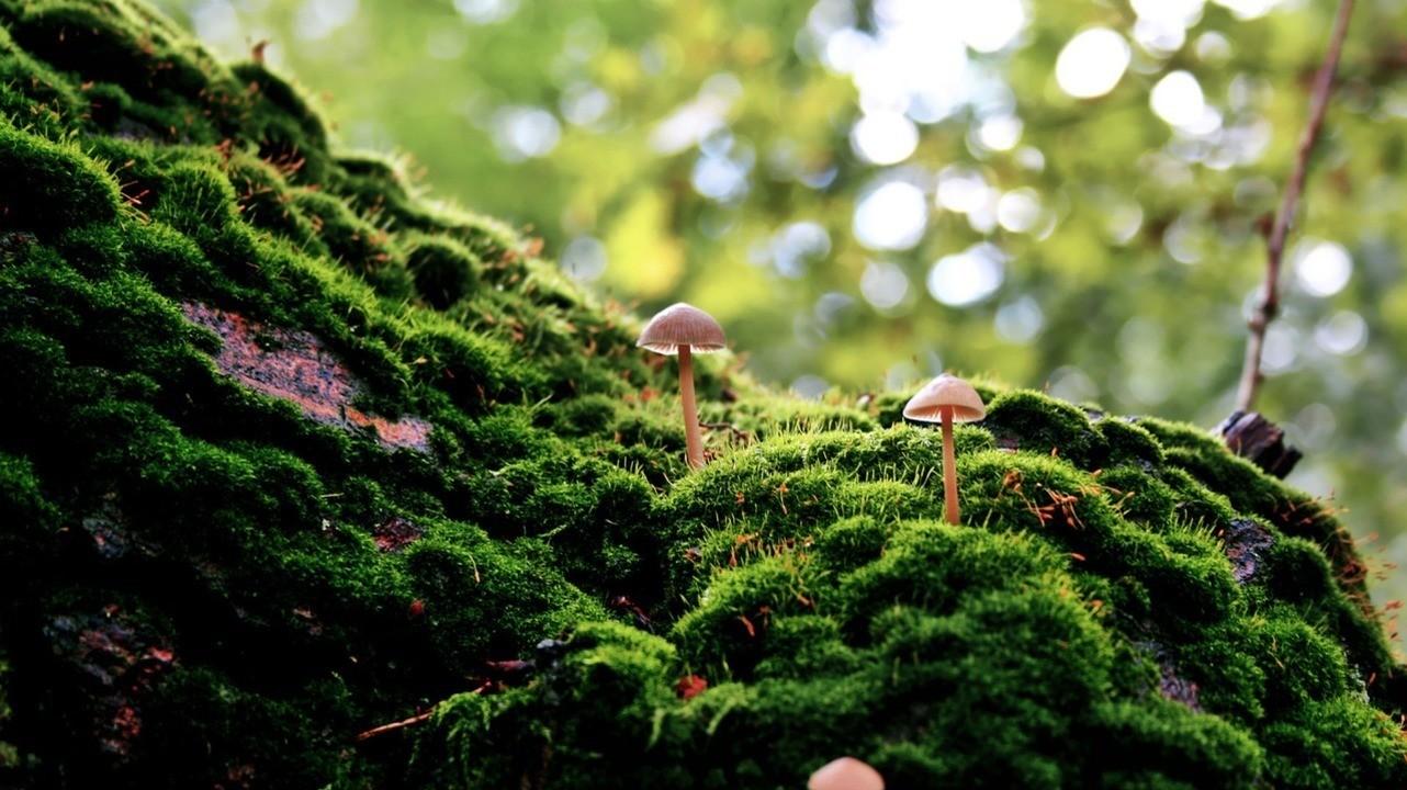 Отравление грибами: грозные симптомы и первая помощь грибы,здоровье,отравление грибами,первая помощь