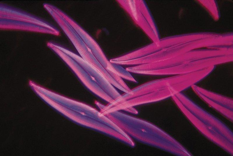 Парадокс фитопланктона загадка, парадокс, природа