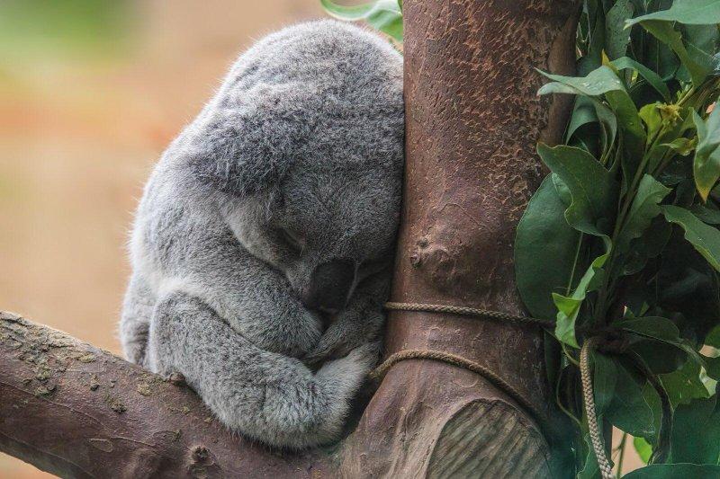 20 смешных и милых фото животных, которые поднимут настроение в пасмурный день