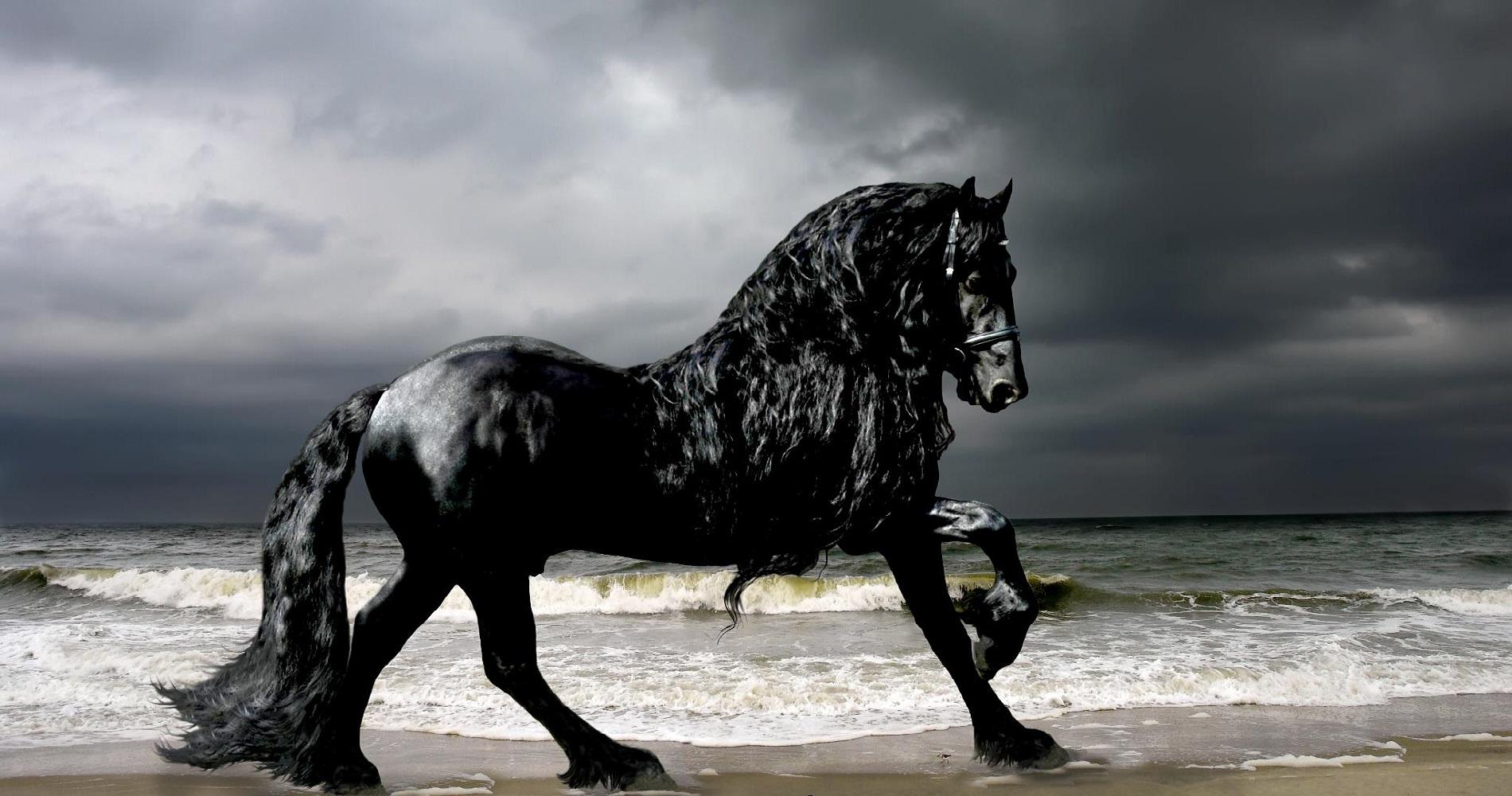 самые дорогие черно белые фото в мире сочи внесли изменения
