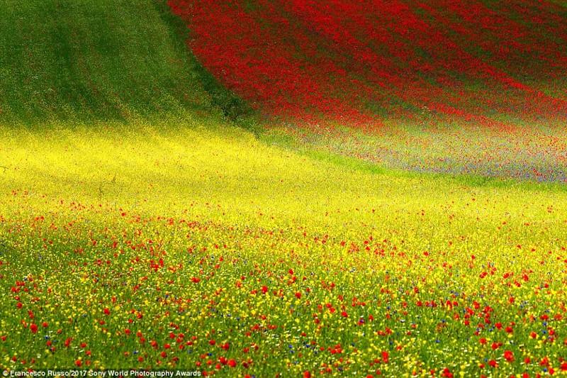 Весенняя палитра. Цветение в национальном парке Сибиллини в Италии искусство, конкурс, красота, фото