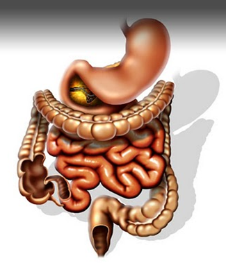 Занимательно о пищеварительной системе человека