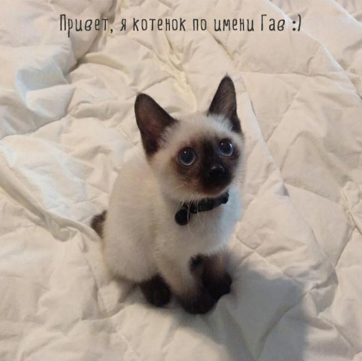 Котопост для настроения))