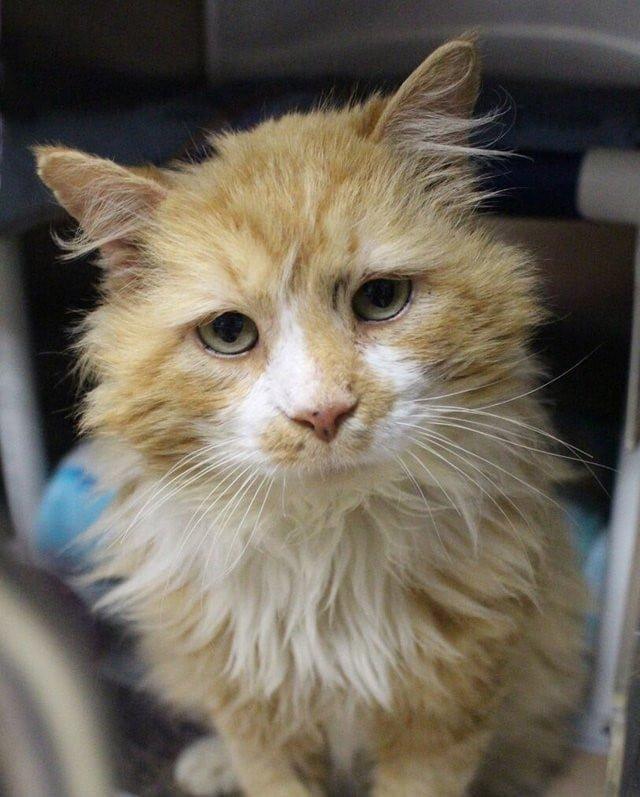 Хозяева отдали кота в другой дом, но он вернулся, пройдя 12 миль в мире, домашний питомец, животные, история, кот, семья