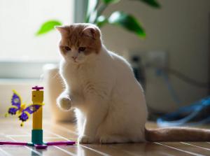 Нужен ли второй котик?