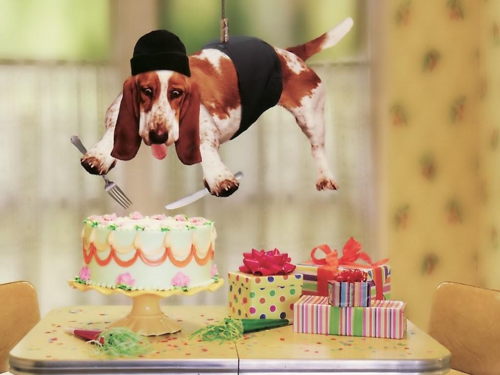 смешные фото открытки к дню рождения бушков