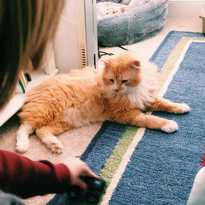 Проект нацелен на помощь бездомным животным, которые попали в трудную ситуацию, как и Тоби в мире, домашний питомец, животные, история, кот, семья