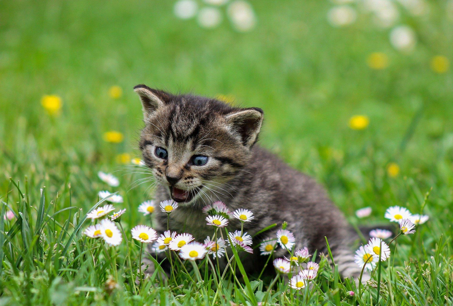 Кошачий «рай»