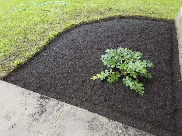 Муж вырастил сад, выполняя обещание, которое он дал своей покойной жене