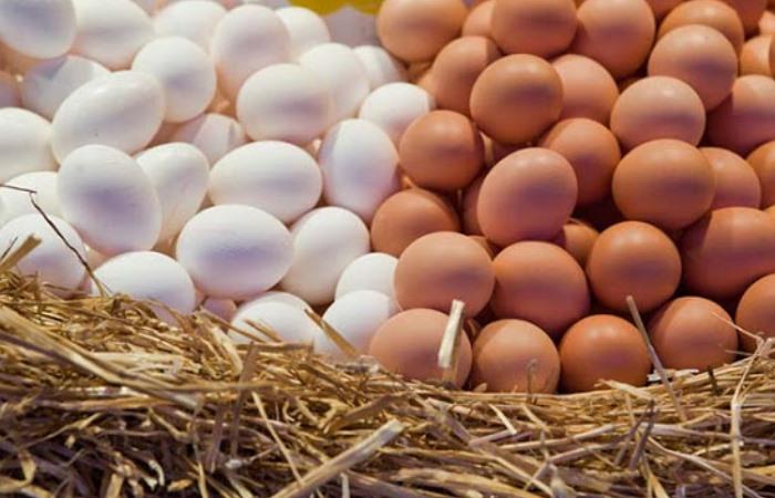 А вы какие яйца покупаете – …