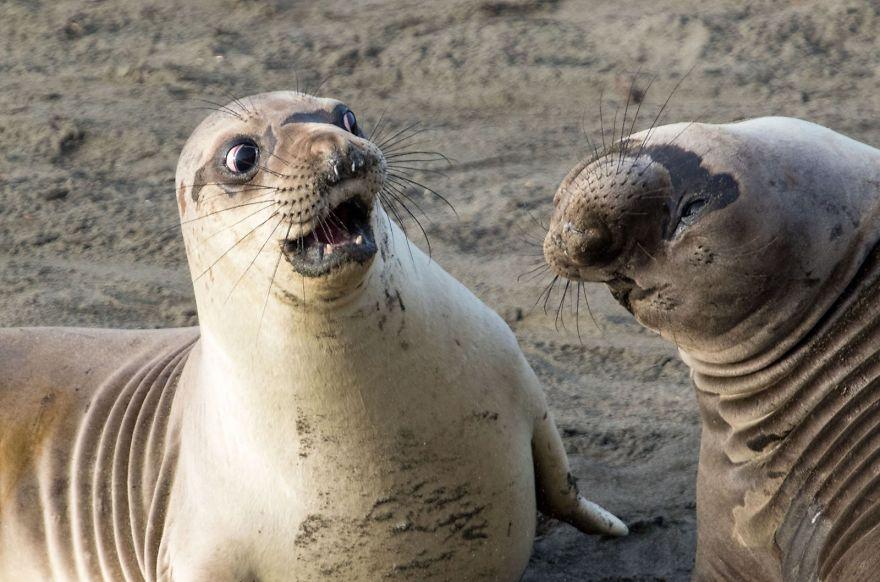 13 смешных фото  зверей, которые  сделают ваш день