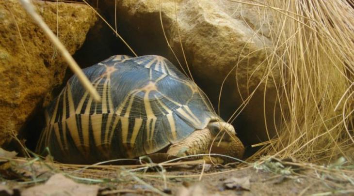 7 животных, которые ставят зоологов в тупик возраст,животные,интересное,природа