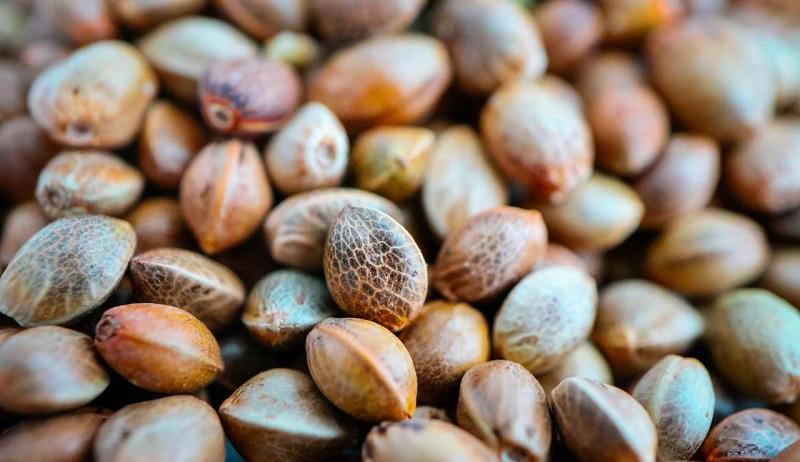 полезные семена