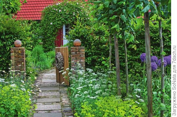 У калитки гостей встречают цветущие декоративный лук Globemaster, пупавка красильная (Anthemis tinctoria) Sauce Hollandaise, орлайя (Orlaya) и манжетка. С арки у входной двери живописно свисает плетистая роза.