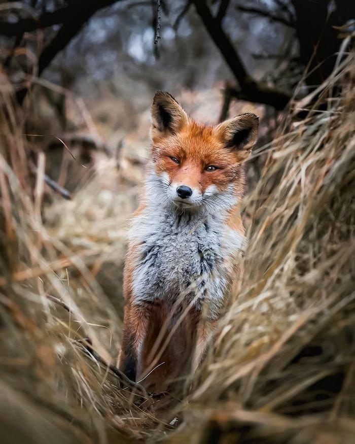 Картинки необычная лиса