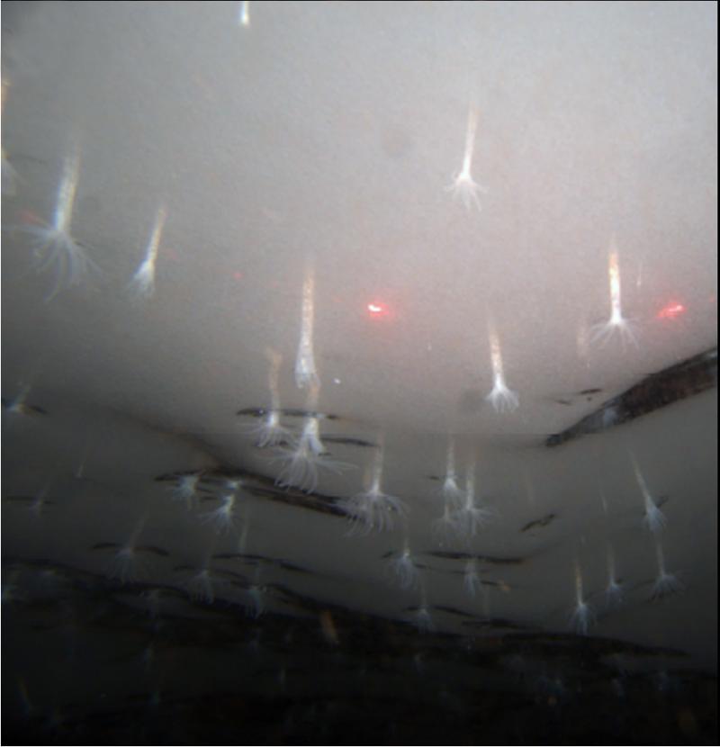 Удивительные приспособленцы Антарктиды природа