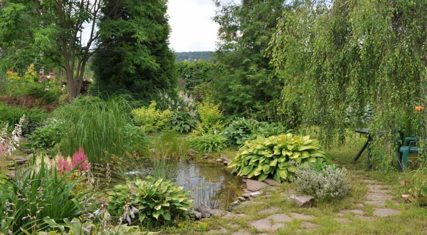 Сад Натальи Китовой