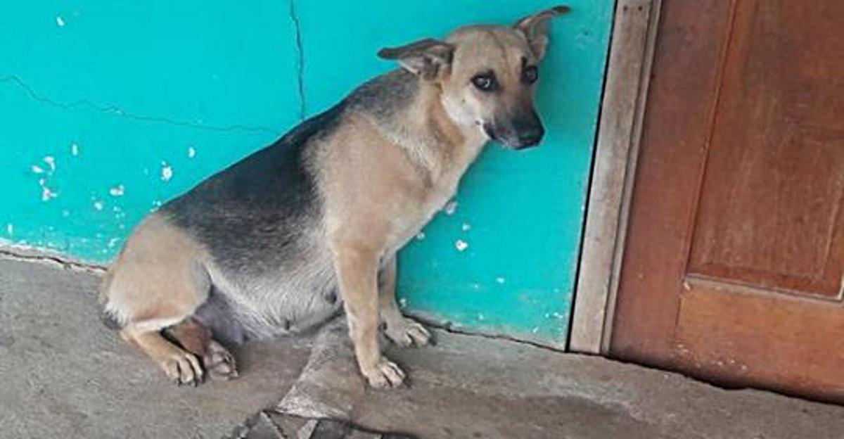Люди отправились на новое место жительства, а беременную собаку бросили