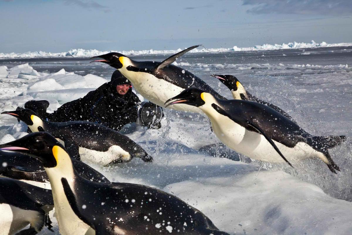 Пол Никлен и его сказочные снимки полярных животных