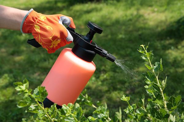 Экологически чистые средства защиты растений от вредителей