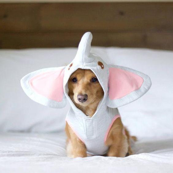 Креативная одежда для домашних любимцев