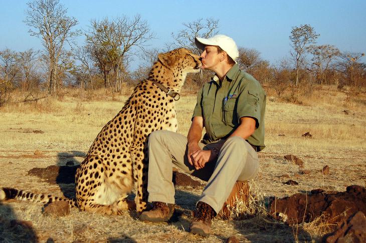 Влюбленные животные в фотографиях