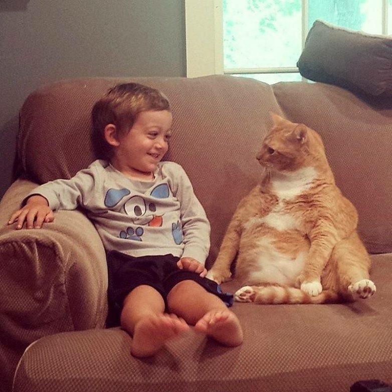 смешные до слез картинки с котами и младенцами полезное вкусное