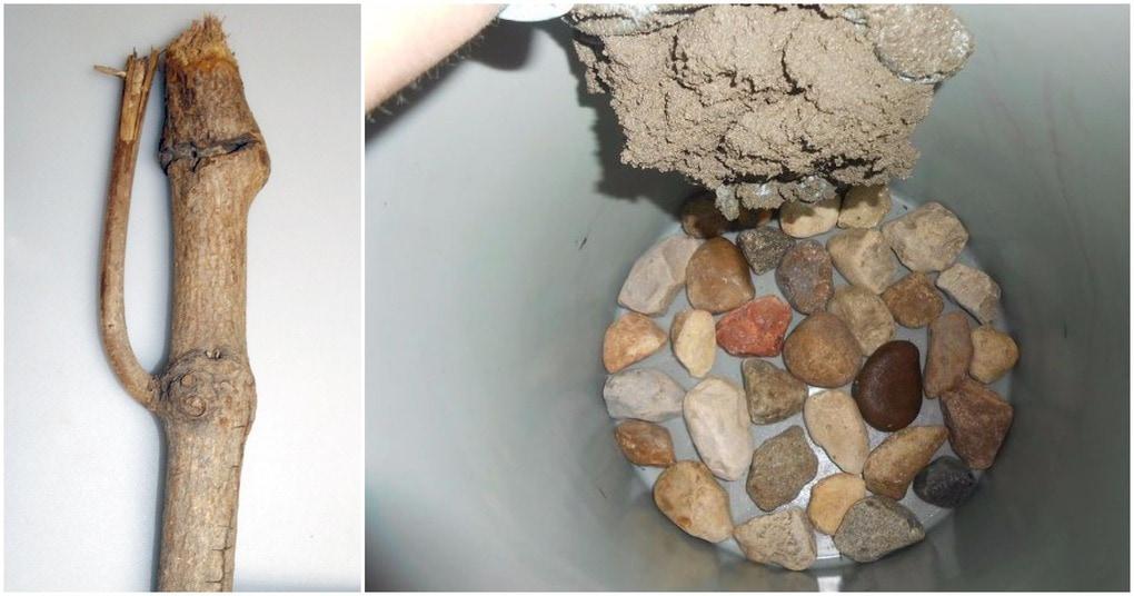 Только посмотрите, что можно сделать из трех веток и небольшого количества цемента