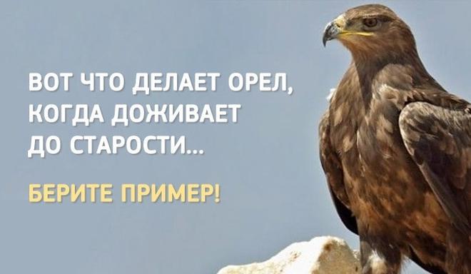 В тот момент, когда орёл нак…