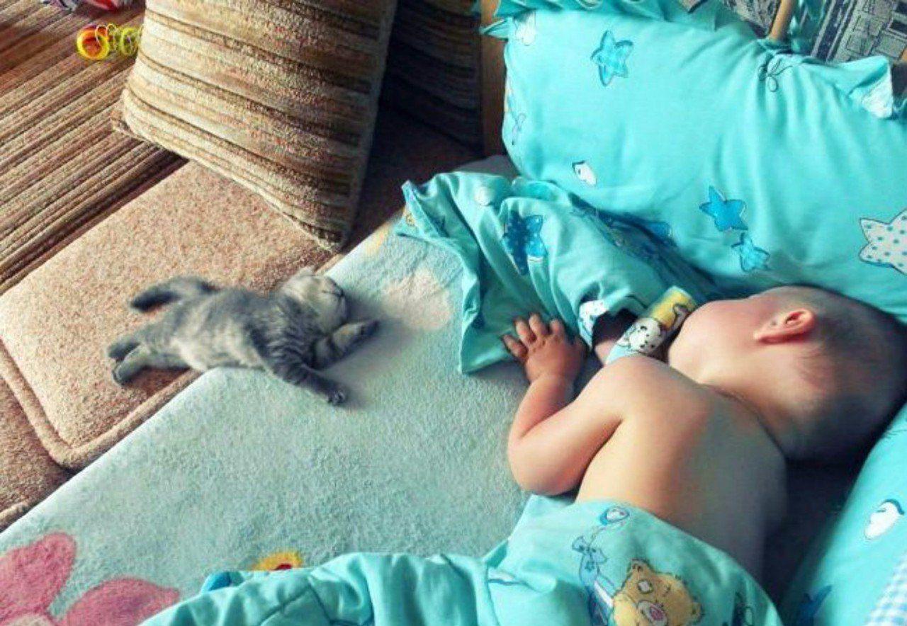 Спят усталые котятки...