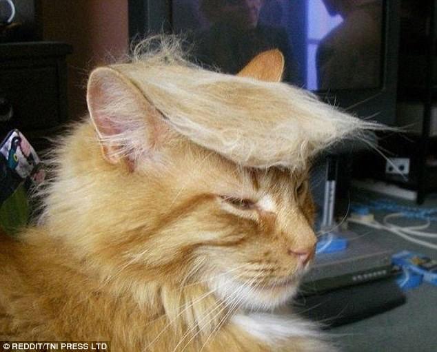 Преврати кота в Трампа! Новая развеселая глупость гуляет по Интернету