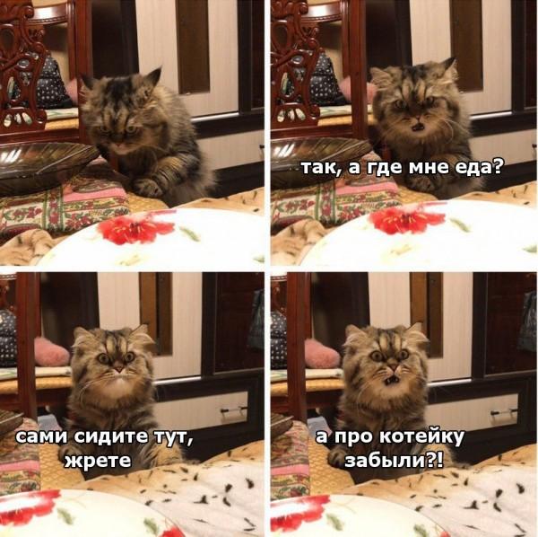Немного котиков  совсем не страшных ))