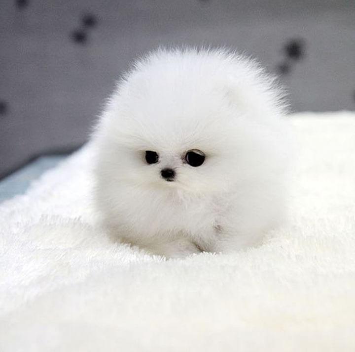 Очаровательные щенки, которых так и хочется взять на руки и потискать