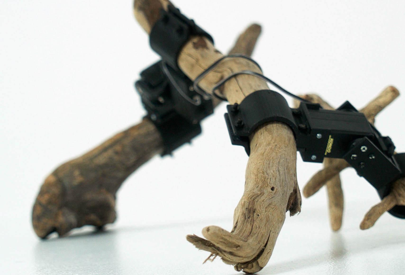 «Из нейросетей и палок»: как необычного робота научили ходить роботы,технологии