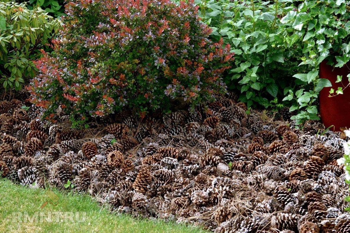 Все виды мульчи — выбираем для себя дача,сад и огород,садоводство