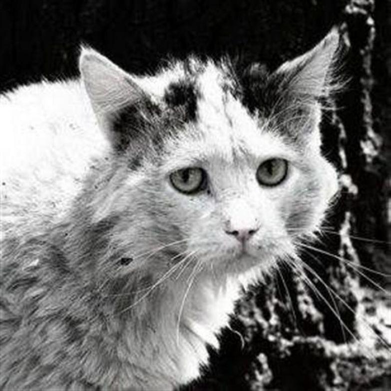 Грустные картинки про животных до слез с надписями