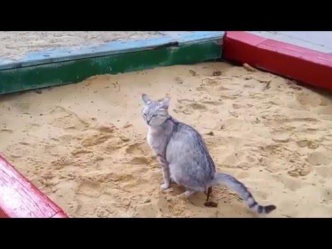 Кошачьи фекалии смертельно опасны для детей !