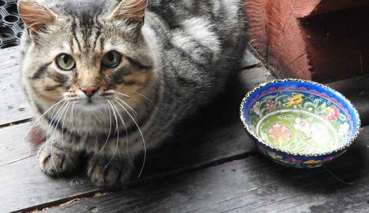 Кот решил серьёзно поговорить с хозяйкой история,прикол,юмор