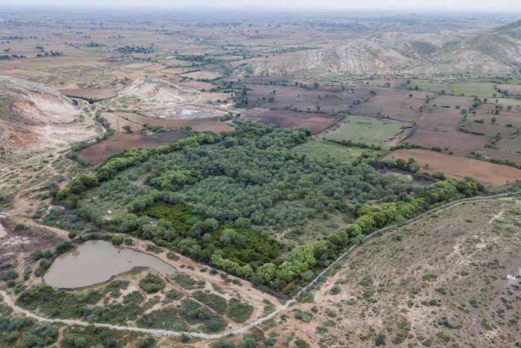 Вот зачем смейная пара 20 лет скупает земли около заповедника тигров природа