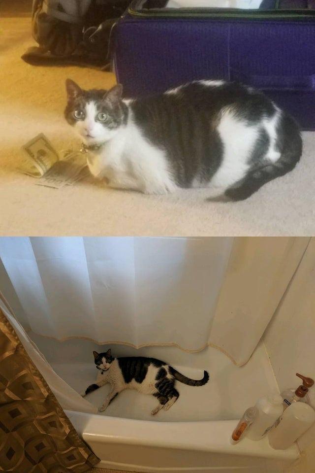 Котенок Похудел За 2 Дня. Почему кошка худеет без видимых причин